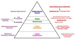 ostéopathie biodynamique